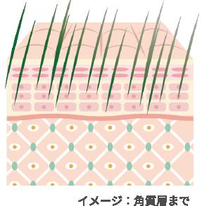角質層のイメージ図